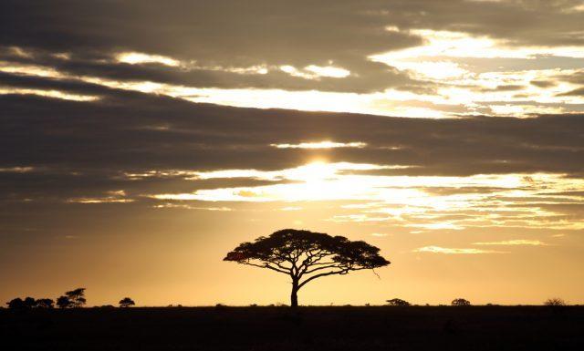Zonopkomst in Serengeti in Tanzania, Afrika