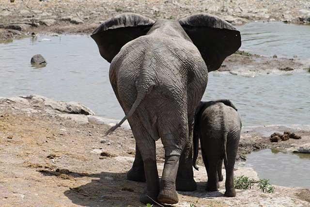 Tien populairste Instagram foto's na een jaar - Olifanten in Etosha National Park