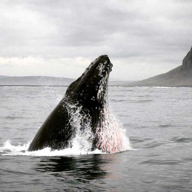 Tien populairste Instagram foto's na een jaar - Walvis in IJsland