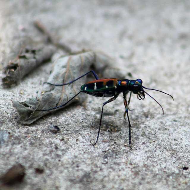 Mijn tien populairste Instagram foto's na een half jaar- nummer 7 kleurrijk insect in Vietnam