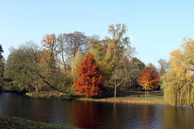 Herfstwandeling IJsselvallei - Herfstbladeren bomen Rijsterborgherpark Deventer