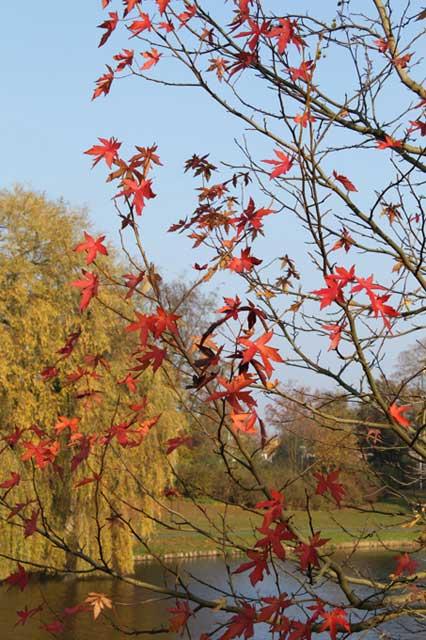 Herfstwandeling IJsselvallei - Rode herfstbladeren