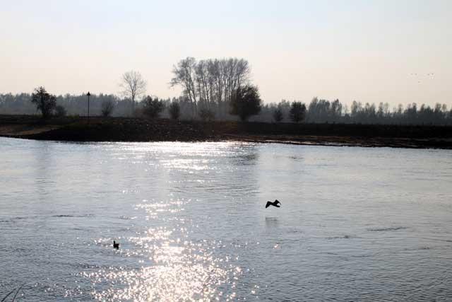 Herfstwandeling IJsselvallei - Vogels boven de IJssel
