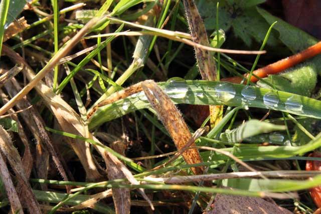 Herfstwandeling IJsselvallei - Waterdruppels op gras