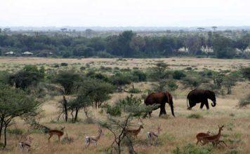 Wilde dieren in Samburu nationaal park in Kenia