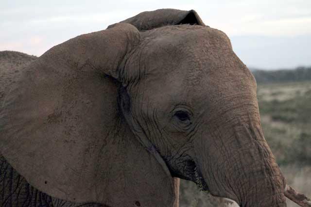 Mijn eerste olifant in het wild in Samburu nationaal park in Kenia