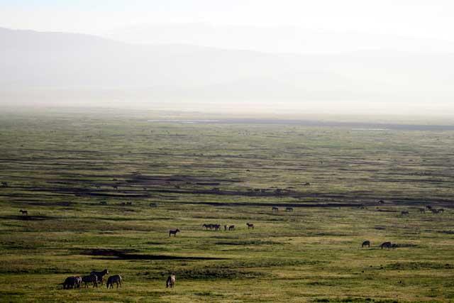 Serengeti en Ngorongoro in Tanzania - De Ngorongoro-krater in Tanzania