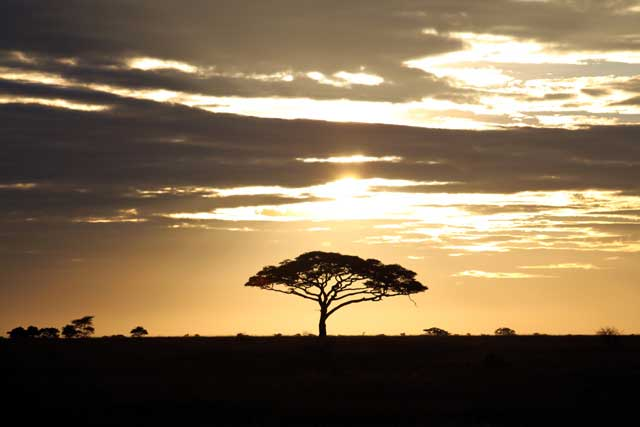 Serengeti en Nogrongoro in Tanzania - Zonsopgang in Serengeti National Park in Tanzania