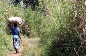Vrouw draagt volle juten zak op hoofd in Uganda