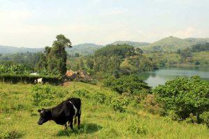 Uitzicht tijdens wandeling 'Top of the world' in Uganda