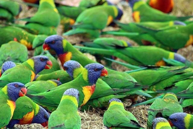 wereldreis: tien meest gelikete fotos instagram regenboogparkieten australie