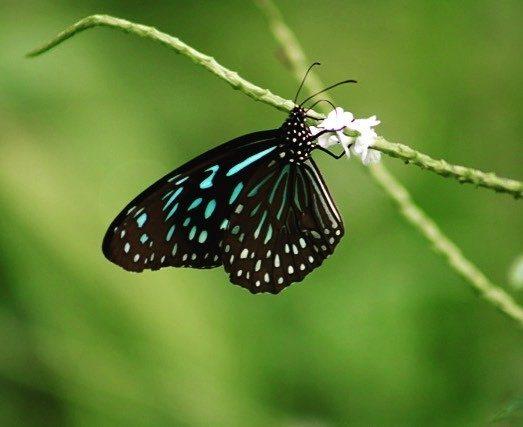 wereldreis: tien meest gelikete fotos instagram vlinder Sumatra